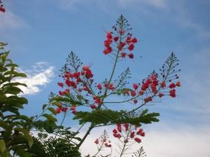 Flowering tree reaching for heaven