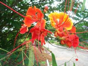 Exotic flowering bush